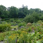 A Secret & Magical Walled Garden in West Wales