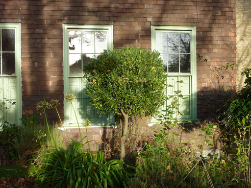 evergreen topiary'