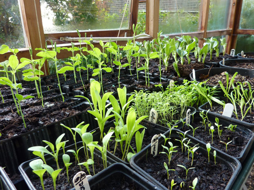 reenhouse Seedlings'