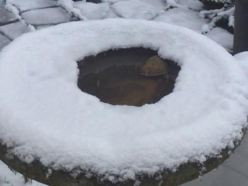 melted snow on bird bath