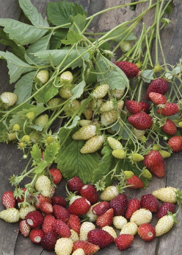 strawberry-czerwony-krem