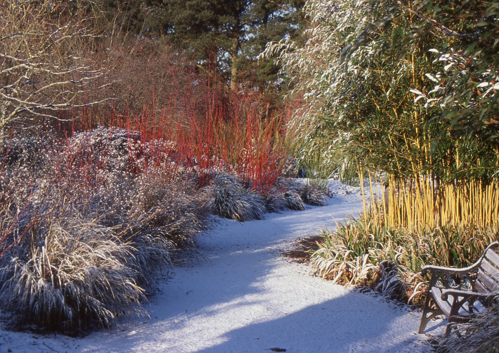 the-winter-garden-at-sir-harold-hillier-gardens