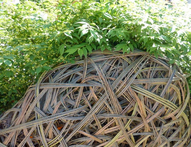curved-willow