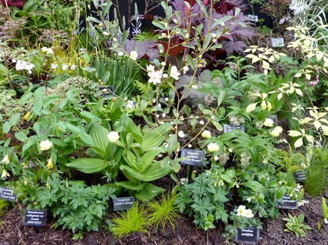 hardy-plants
