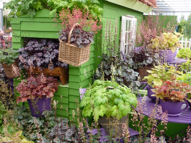 Heuchera | The Enduring Gardener