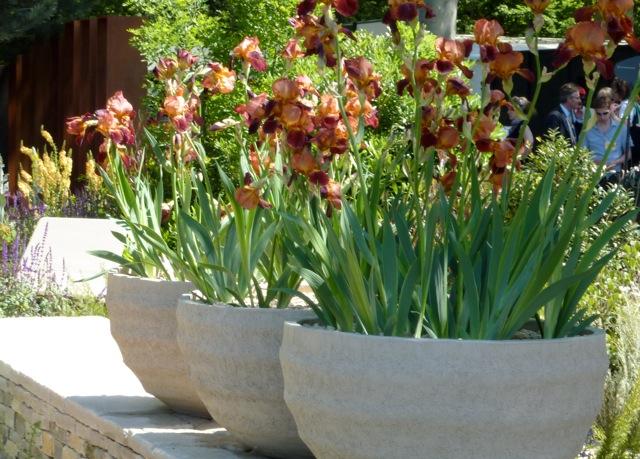 iris-bowls