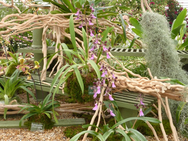 rare-orchids