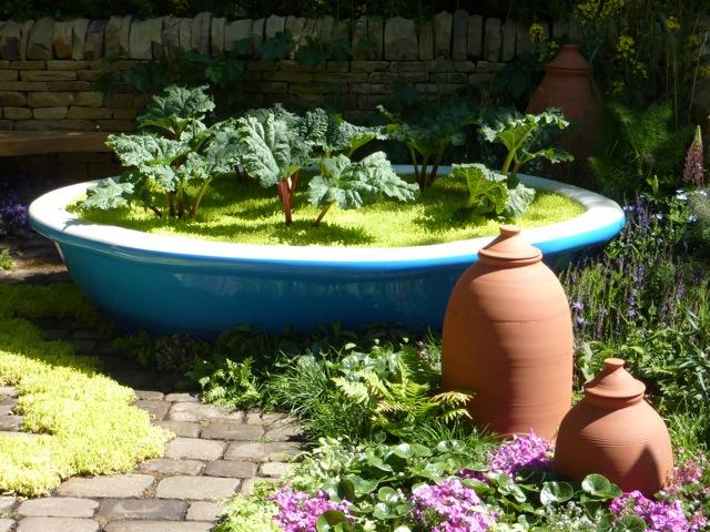 rhubarb-garden