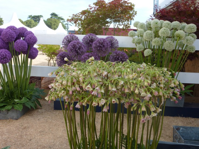 http://www.theenduringgardener.com/alliums