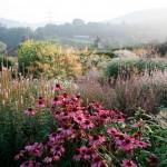 National Gardens Scheme opening