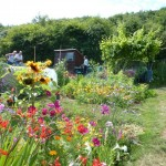 Open day at the Allotments - our Japanese neighbours decorative plot