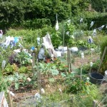 Recycling is big on this particular allotment