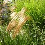 La Malposte – a mill garden