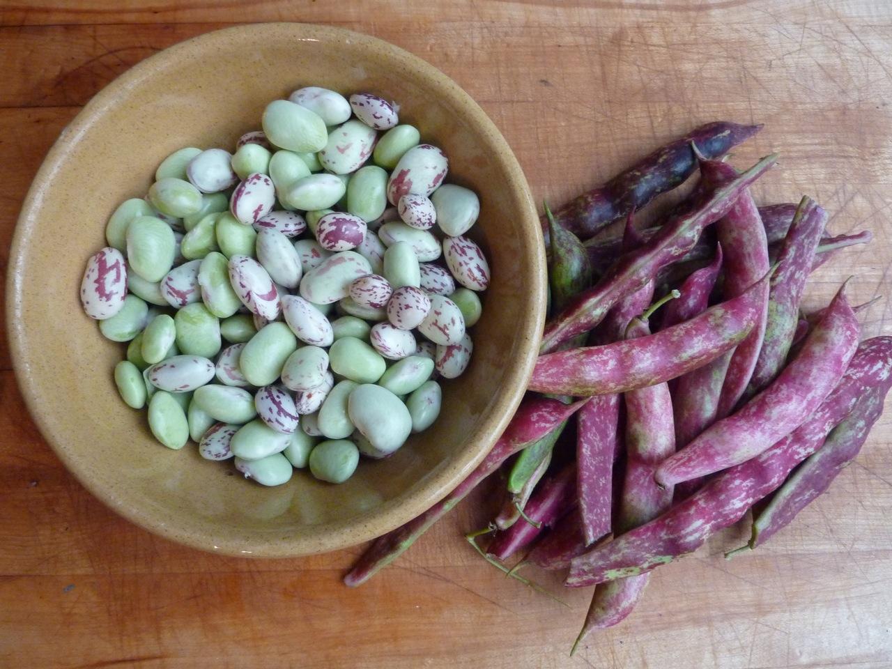 October - Freshly podded borlotti beans