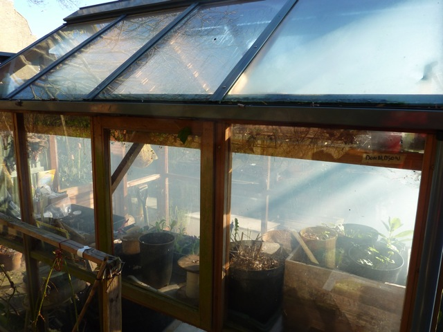 A cloud of garlic smoke as I fumigate the greenhouse - the smell definitely lingers