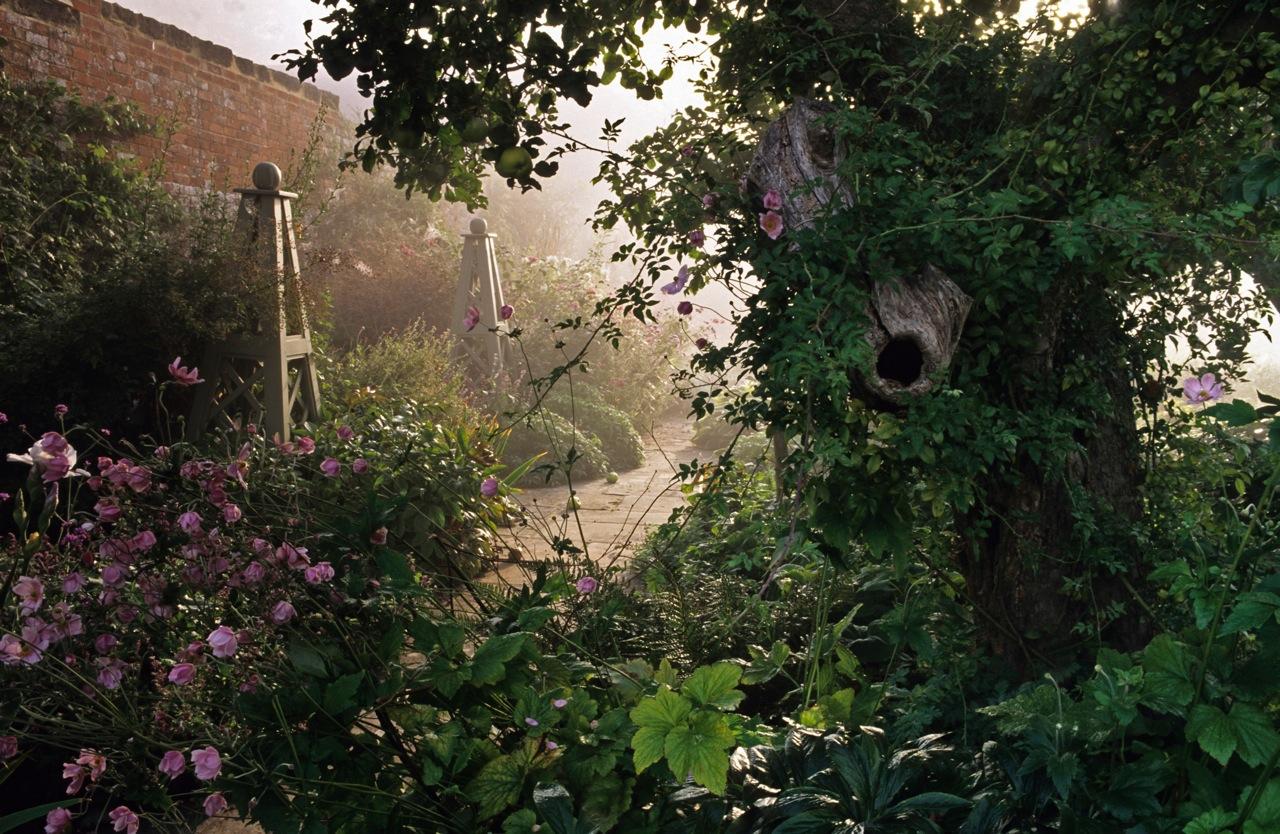misty-garden