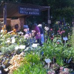 Great Dixter Plant Fair