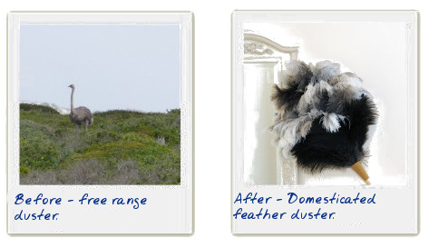 before and after - feather duster