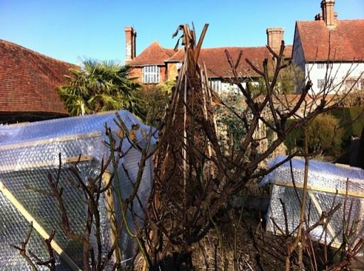 garden insulation in winter