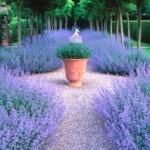 beautiful-purple-plants-around-pathway