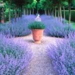 beautiful-purple-plants-around-pathway