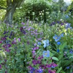 wonderful planting to suit a cottage garden