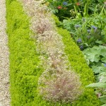 box-hedge-around-border