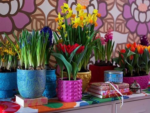 spring bulbs flowering in colourful pots