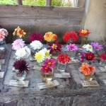 great way for labelling flowers