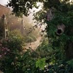 formal-garden-border-in-haze