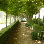 tree lined walkway in formal garden