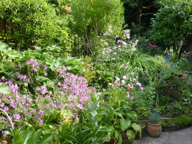 green and pink garden border