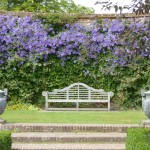 clematis-surround-garden-bench