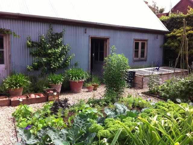 potager garden with tin shed to rear