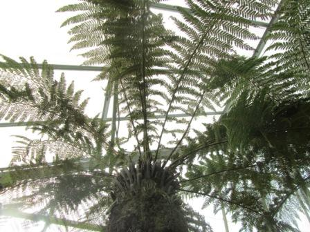 close up on tree fern