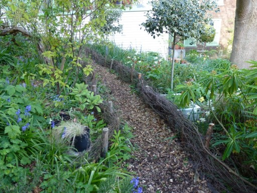 garden path edged with willow
