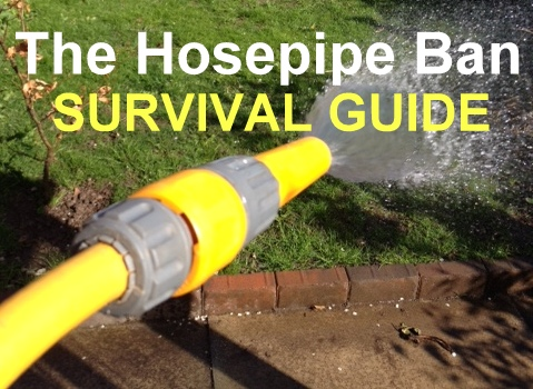 hosepipe spraying water on garden