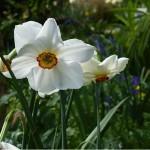 A Flowery Fast Forward