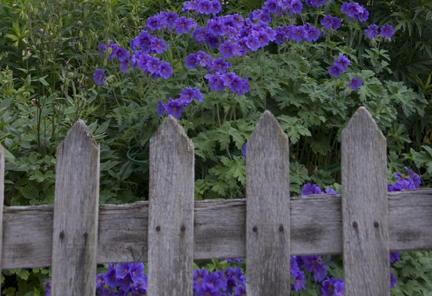 wooden picket fence with flower beyond