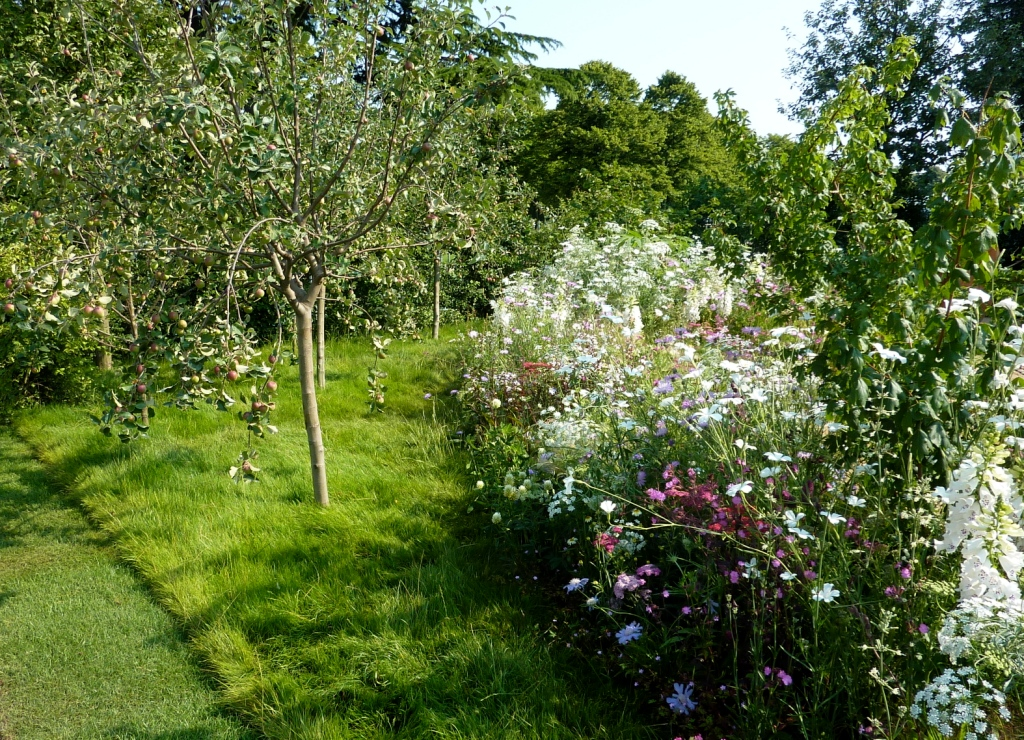 young fruit trees in cottage garden