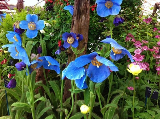 bright blue flowers