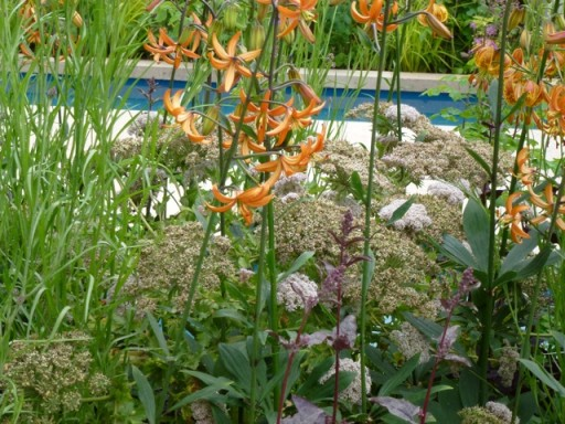 orange martagon lilies