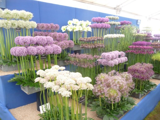 impressive display of range of aliums