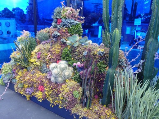 cactus display juxtaposes coral reef