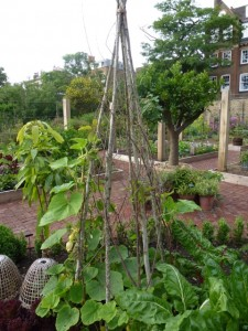 wigwam for climbing plants at the chelsea physic garden