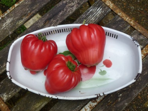 ripe brandywine tomatoes on a plate