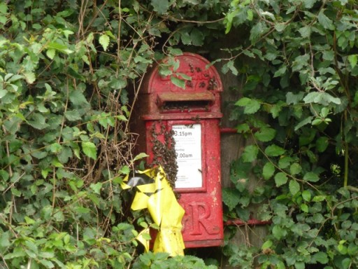 bees take residence in a postbox