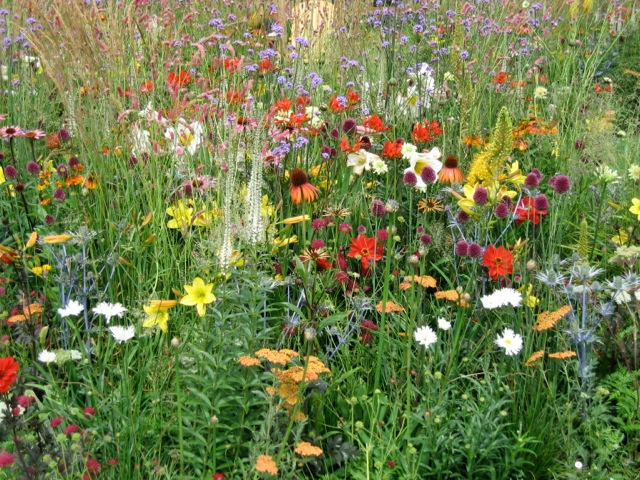vibrant meadow like planting