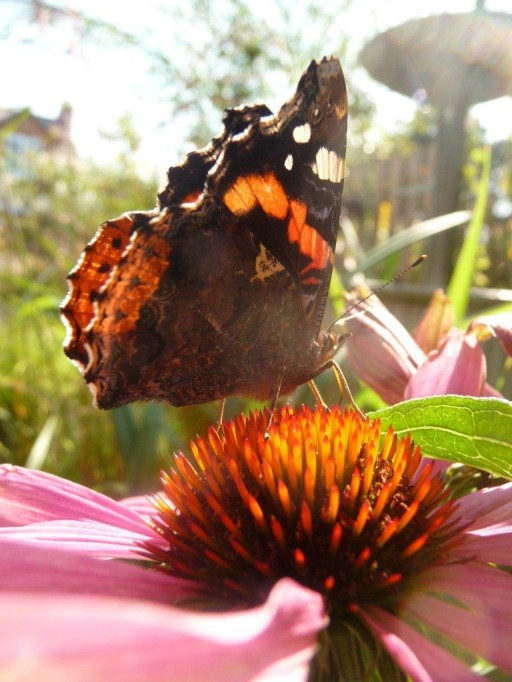 close up of butterfly