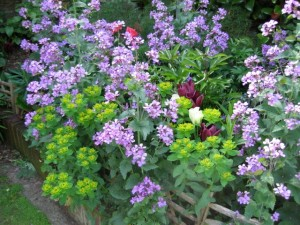 Mix of plants supported in garden border